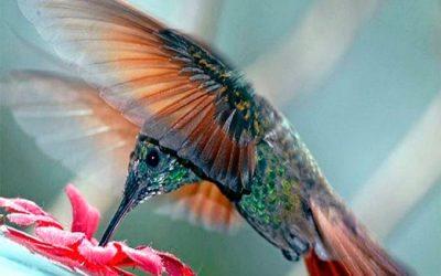 Escribir para el algoritmo colibrí de Google